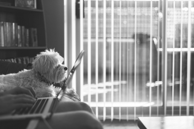 dog reading laptop